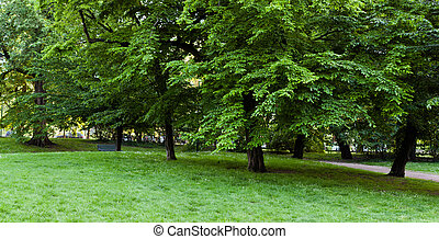 Green trees in the park. Panorama