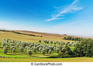 Green trees in Tuscany