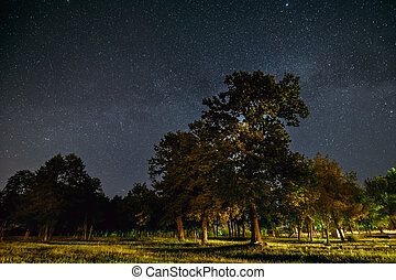 Green Trees Oak Woods In Park Under Night Starry Sky With Milky Way Galaxy
