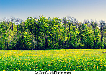 Green trees on a field with dandelions