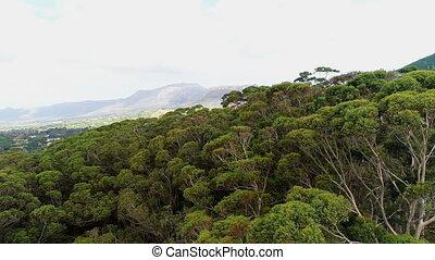 Green trees on the mountain slope 4k - Dense green trees on...