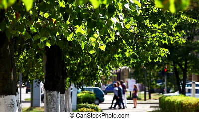 Green trees on the summer street
