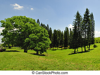 Panoramic landscape with green grass field and pine trees