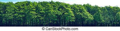 Green trees scenery in panorama