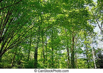trees under the sun