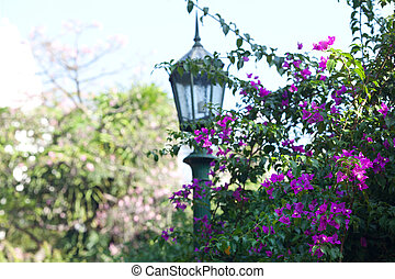 green trees with purple flowers and lantern in the park