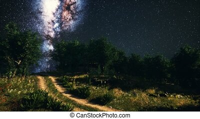 Green Trees Woods In Park Under Night Starry Sky