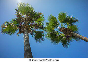 Green Tropical Coconut Palm Trees in the Blue Sunny Sky