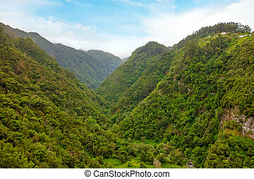 green tropical forest valley