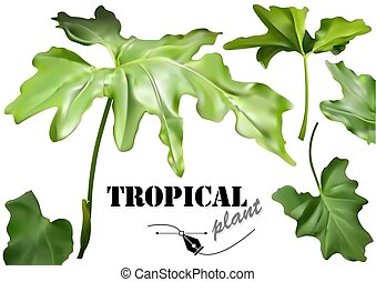 Green Tropical Leaves Set