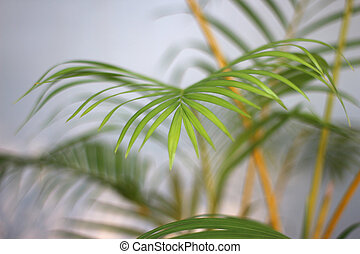 green tropical palm leaf with shadow on white wall