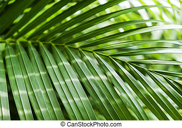 Green tropical palm leaf with sunlight background