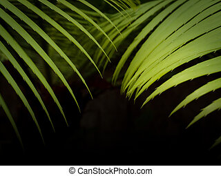Green tropical palm leaves, floral pattern on black background.