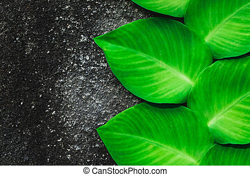 Green tropical plant growing on background of grey and black concrete wall