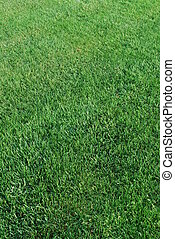 Green turf background - green grass background on a field