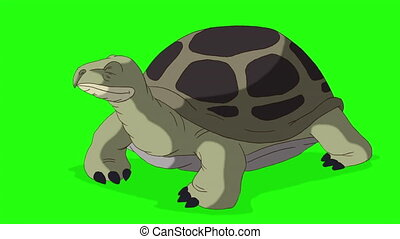 Green turtle peeks out of its shell and hides back. Handmade animated looped footage isolated on green screen