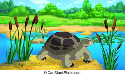 Big Green turtle peeks out of its shell near the pond on a sunny summer day. Handmade 2D animation.