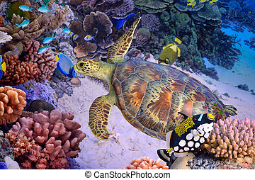 Green turtle, tropical coral reef