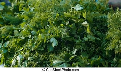 Green twigs of dill and parsley lying in bunches outdoors in...