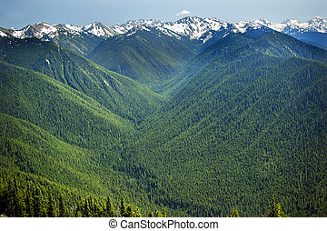 Green Valleys Evergreens, Snow Mountains Hurricaine Ridge Olympic National Park Washington State Pacific Northwest  Ridge Line