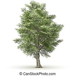 Green vector tree isolated on white background.
