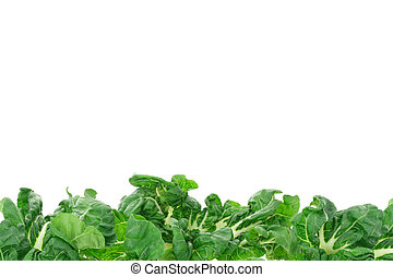 Green vegetable border background with copy space