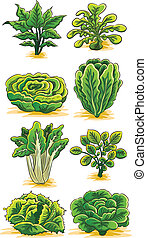Green Vegetables Collection - cartoon illustration of green...