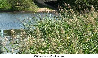 Green vegetation. Background.