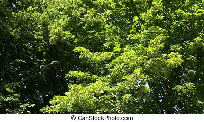 Green vegetation. Background.