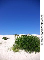 Green vegetation in beach sand.