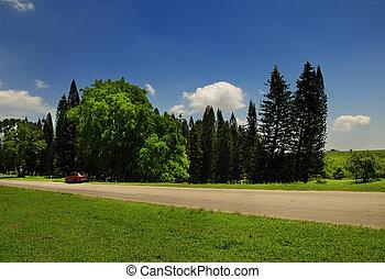 Green vegetation landscape