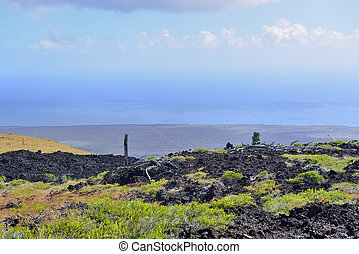 green vegetation on an old lava flow field by the ocean in Volcanoes National Park, Big Island of Hawaii