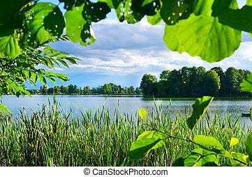Green vegetation on lake