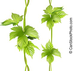 Green vertical vine liana leaves hops. Seamless vector...