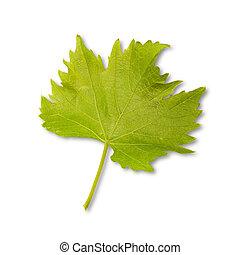 Green vine - vine leaves in front of white background
