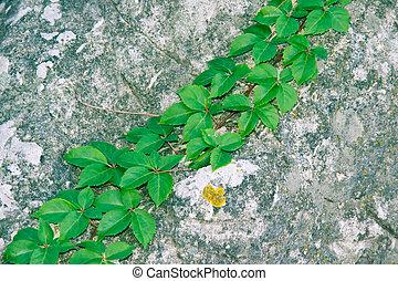 green vine on a rock