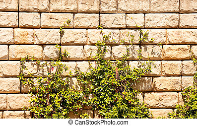 Green Vines on a Stone Block Wall