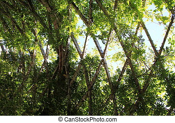 Lush green vines growing over curved wooden trellis under sunny skies.