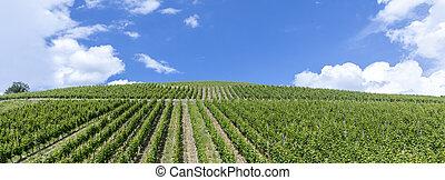 green vineyard in the Rheingau, Eltville