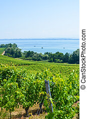 Green vineyards on the hill above Neuchatel Lake in ...