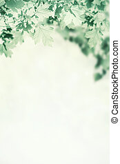 Green Vintage Background with Maple