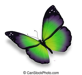 Green, violet butterfly, isolated on white