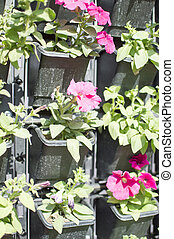 Green wall plants