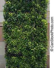 Green wall, vertical garden. Background with lush foliage...