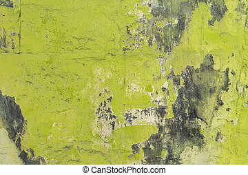 Green wall with mold background