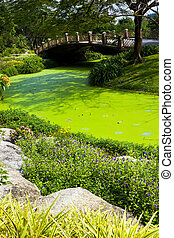 Green water in the park