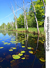 green water lilies on small lake