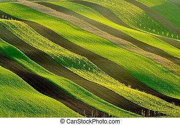 Green wavy hills in South Moravia, Csezh Republic