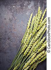 Green wheat ears on dark rusty background