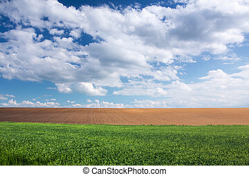 Green wheat field, brown soil and blue sky